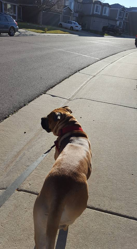 dog walking in Highlands Ranch